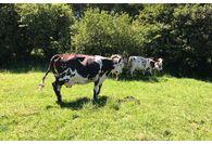 Biostime : un nouveau lait infantile bio et normand
