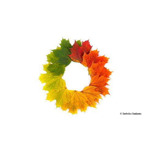 Image - Couronne de feuilles