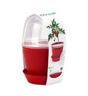 Pot cloche tomates cerises à faire pousser d'Oxybul